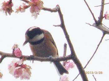花と鳥33.jpg